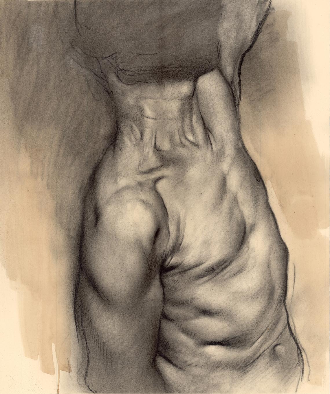 shoulder neck and torso study MID